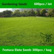 Groundcover Plants Festuca Elata Seeds 600pcs, Four Seasons Evergreen Gao Yang Mao Seeds, Family Gramineae Green Gardening Seeds