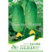 FD1232 Japan Cucumber Seed Cucumis Sativus Organic Vegetable ~1 Pack  Seeds~