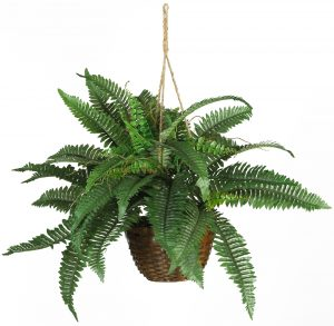 CREATIONS OF EARTH CONSULTING & PLANT MAINTENANCEBoston Fern Silk Hanging Basket, Green